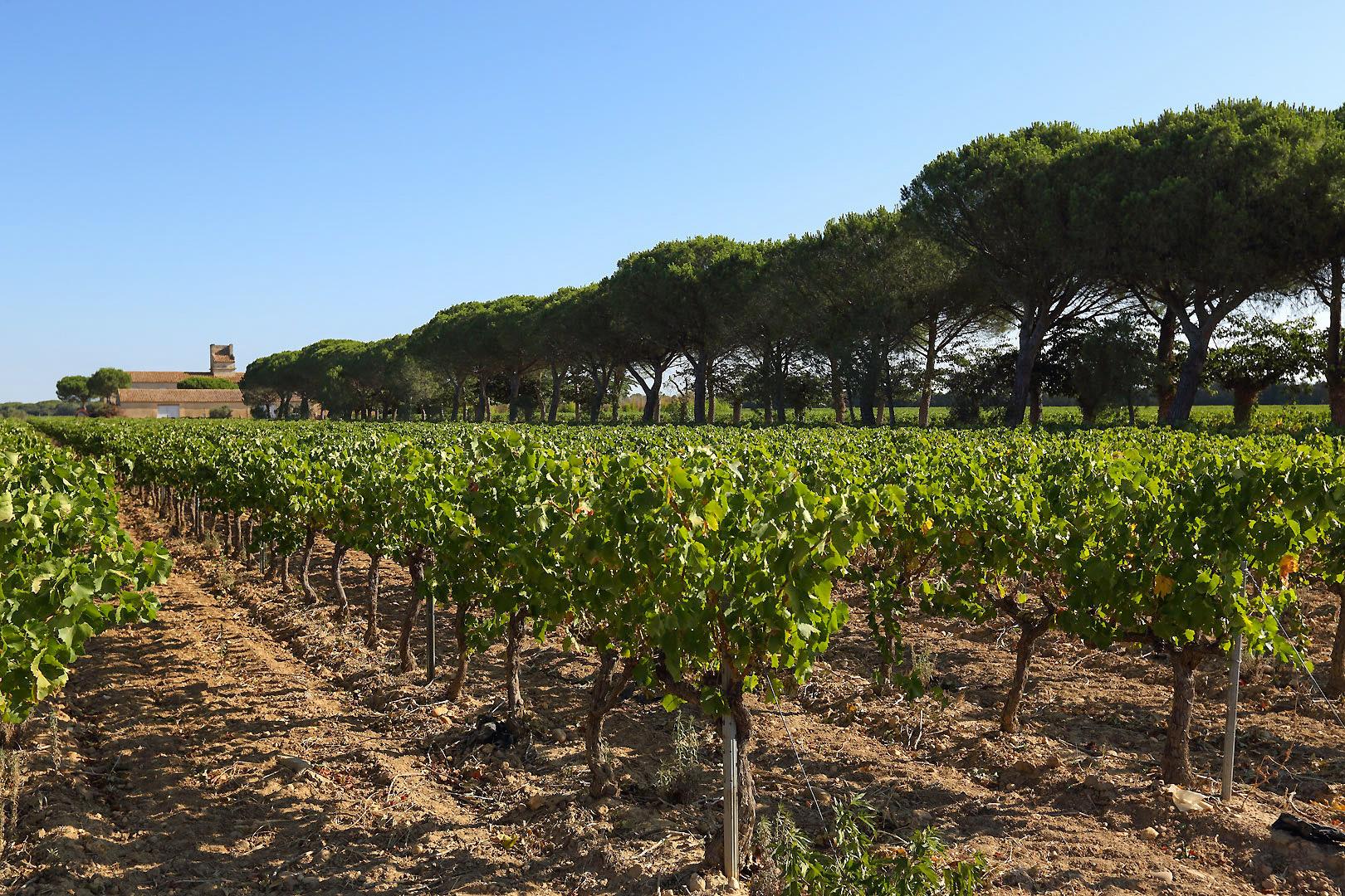 terroir grands vins