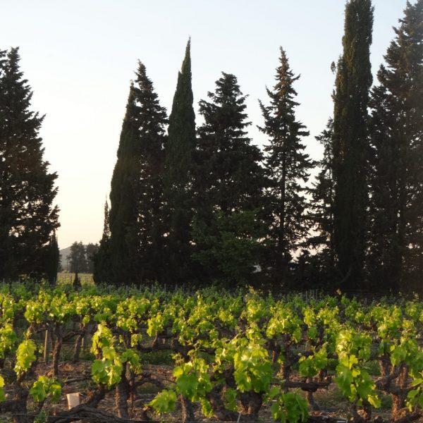 les partenaires grands vins de pazac