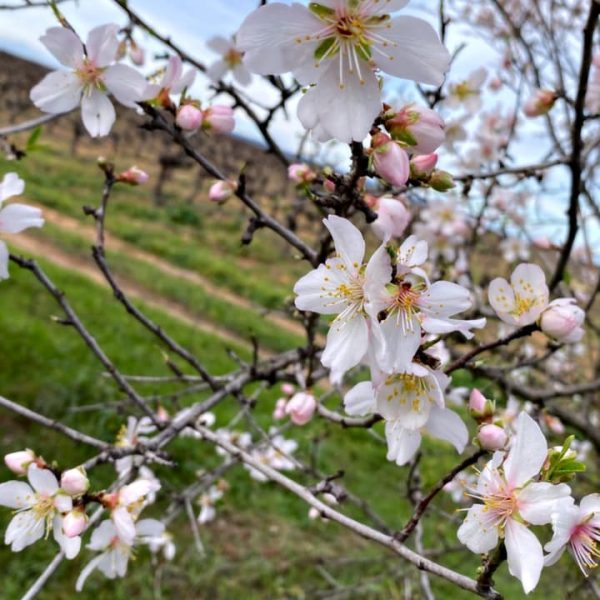fleur nature cave pazac